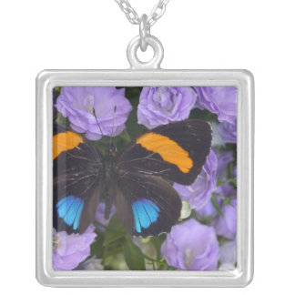 Collier Photographie de Sammamish Washington du papillon 3
