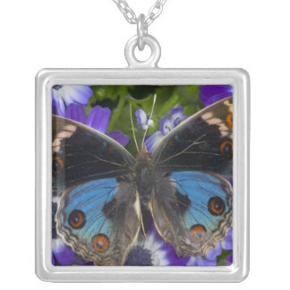 Collier Photographie de Sammamish Washington du papillon 9