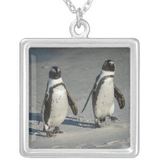 Collier Pingouin africain (demersus de Spheniscus) 2