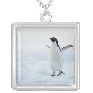 Collier Pingouin d'Adelie, Antarctique