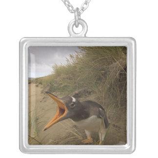 Collier pingouin de gentoo, Pygoscelis Papouasie, sur le