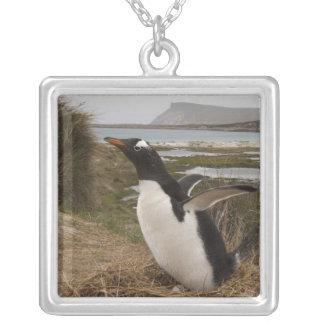 Collier Pingouin de Gentoo (Pygoscelis Papouasie) sur un