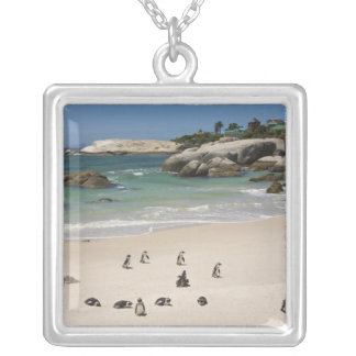 Collier Pingouins à la plage de rochers, ville de Simons,