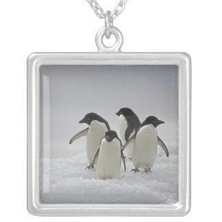 Collier Pingouins d'Adelie sur des écoulements de glace
