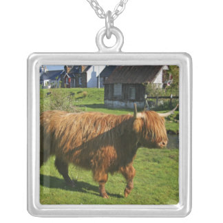 Collier Plockton, Ecosse. Faire de Coooo velu (vaches)