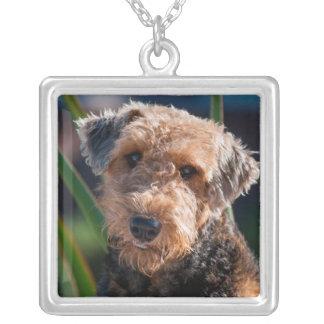 Collier Portrait d'Airedale Terrier 1