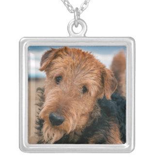 Collier Portrait d'Airedale Terrier 2