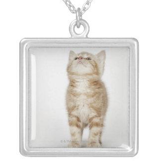 Collier Portrait de chaton recherchant