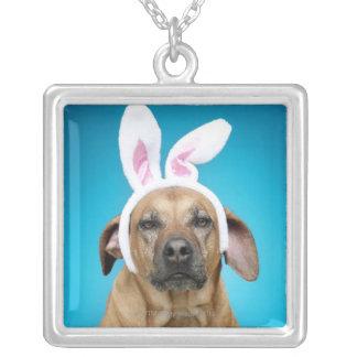 Collier Portrait de chien utilisant des oreilles de lapin