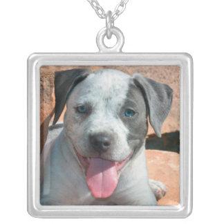 Collier Portrait de chiot du Staffordshire Terrier