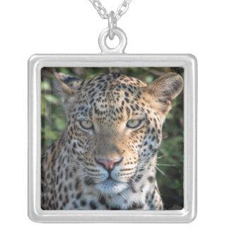 Collier Portrait de léopard, fin