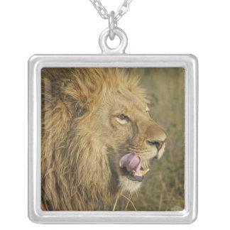 Collier Portrait de mâle de lion léchant sa bouche