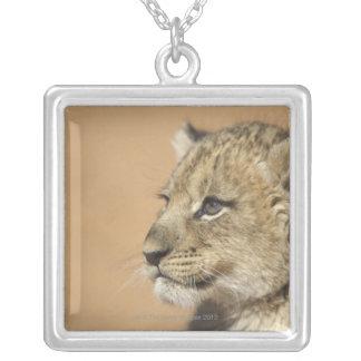 Collier Portrait de petit animal de lion (Panthera Lion),