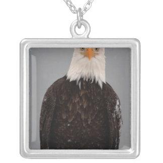 Collier Portrait d'Eagle chauve dans la neige, Haliaeetus