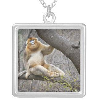 Collier Portrait du singe d'or masculin dans l'arbre