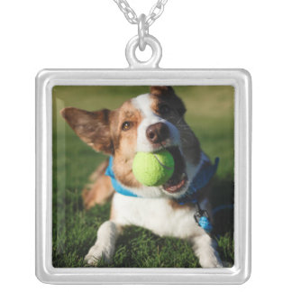 Collier Portrait d'un chien, Phoenix, Arizona