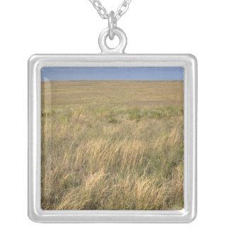 Collier Prairie de prairie à l'est de Sidney, Nébraska