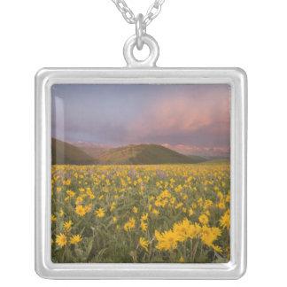 Collier Pré spectaculaire de fleur sauvage au lever de