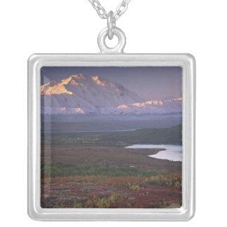 Collier Pris début septembre en parc national de Denali