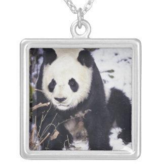 Collier Province de l'Asie, Chine, Sichuan. Panda géant