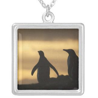 Collier Pygoscelis Papouasie de pingouins de Gentoo) au
