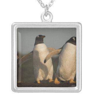 Collier Pygoscelis Papouasie de pingouins de Gentoo) sur