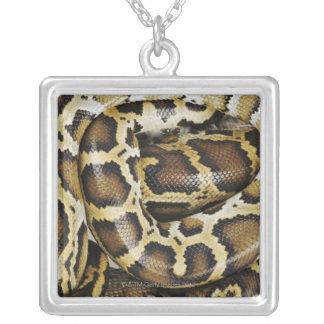 Collier Python birman