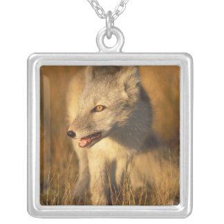 Collier renard arctique, lagopus d'Alopex, manteau
