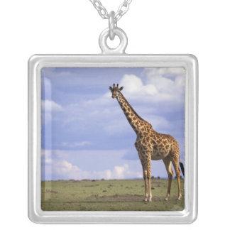 Collier Réservation de jeu du Kenya, Mara de masai. Girafe