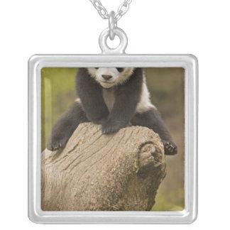 Collier Réservation de panda de Wolong, Chine, panda de