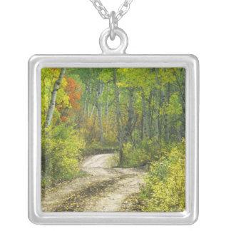 Collier Route avec des couleurs d'automne et trembles dans