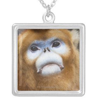 Collier Roxellana d'or masculin de Pygathrix de singe