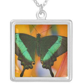 Collier Sammamish, papillon tropical 19 de Washington