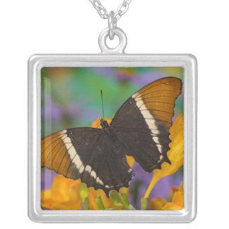 Collier Sammamish, papillon tropical 29 de Washington