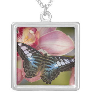 Collier Sammamish, papillon tropical 2 de Washington