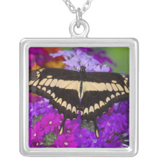 Collier Sammamish, papillon tropical 36 de Washington
