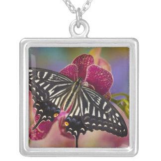 Collier Sammamish, papillon tropical 3 de Washington