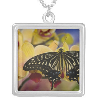 Collier Sammamish, papillon tropical 44 de Washington