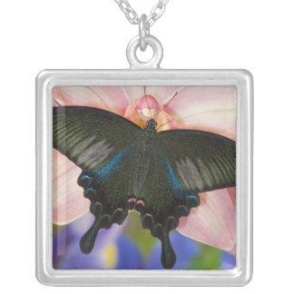 Collier Sammamish, papillon tropical 6 de Washington