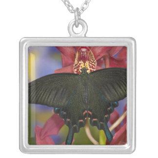 Collier Sammamish, papillon tropical 7 de Washington