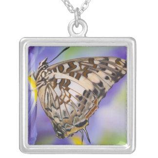 Collier Sammamish, Washington. Papillons tropicaux 22