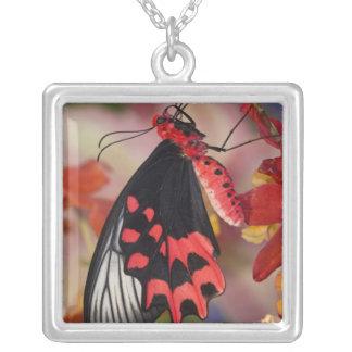 Collier Sammamish, Washington. Papillons tropicaux 3