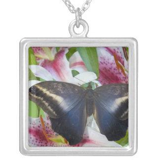 Collier Sammamish, Washington. Papillons tropicaux 36