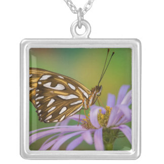 Collier Sammamish, Washington. Papillons tropicaux 40