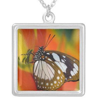 Collier Sammamish, Washington. Papillons tropicaux 42