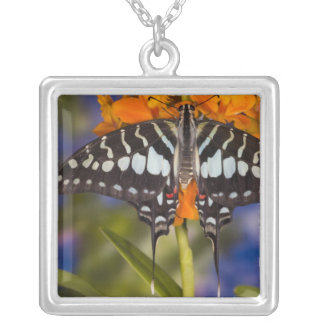 Collier Sammamish, Washington. Papillons tropicaux 50