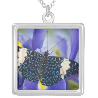 Collier Sammamish, Washington. Papillons tropicaux 56