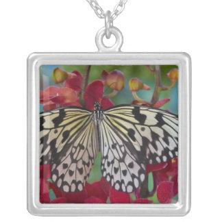 Collier Sammamish, Washington. Papillons tropicaux 63