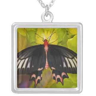 Collier Sammamish, Washington. Papillons tropicaux 9