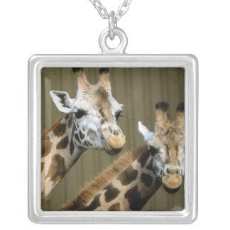 Collier Seattle, Washington. Deux girafes